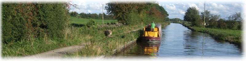 Sheep on the towpath